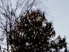 Tree lightin'