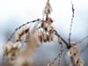 Seediness