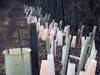 Tree tubes