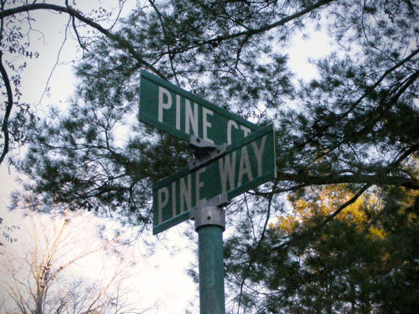 Pine What?