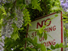 No stopping or wisteria.