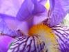 Iris (not a sclera! not a pupil!)