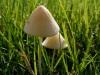 Mushroom week [4]