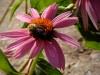 Flowers and honeybees