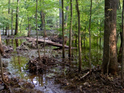 Passaic River Park - Trail is underwater