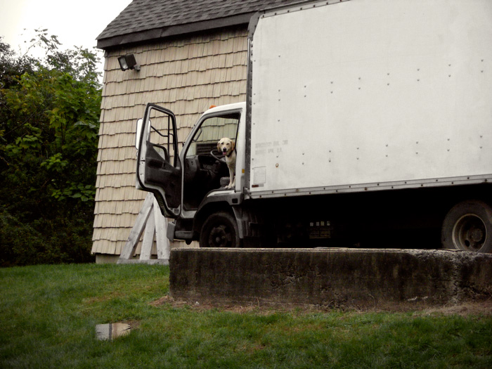 Dog inna truck.