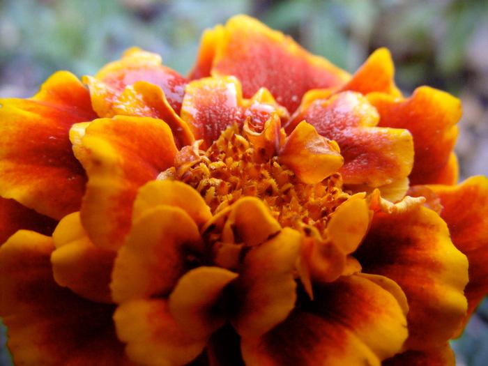 Ah, sweet Marigold, how we loved ye.