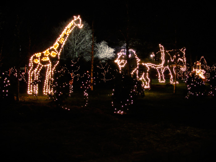 Animals in lights!