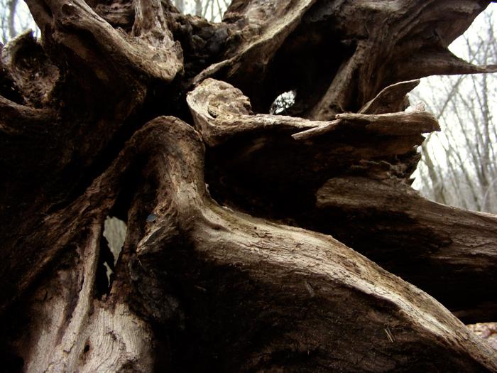 Juuuust an uprooted tree.