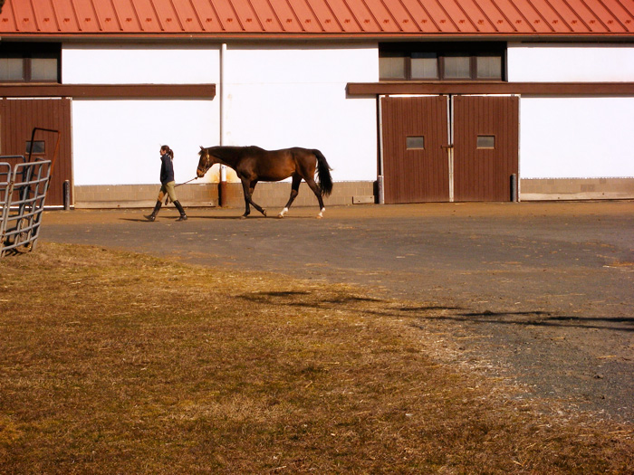 Walkin' around the Watchung Stables