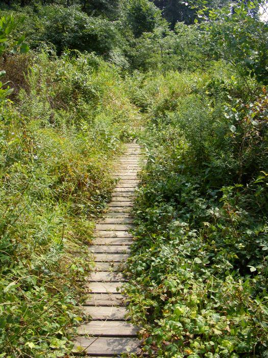 Passaic River walkway, summer 2011