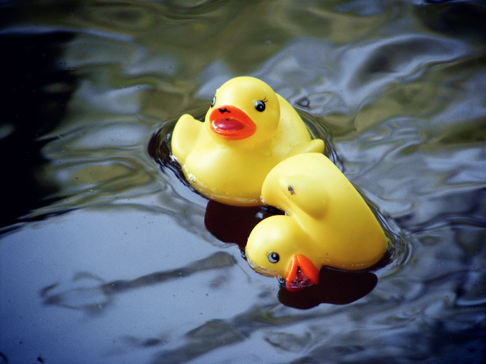 Rubber Ducky Festival!