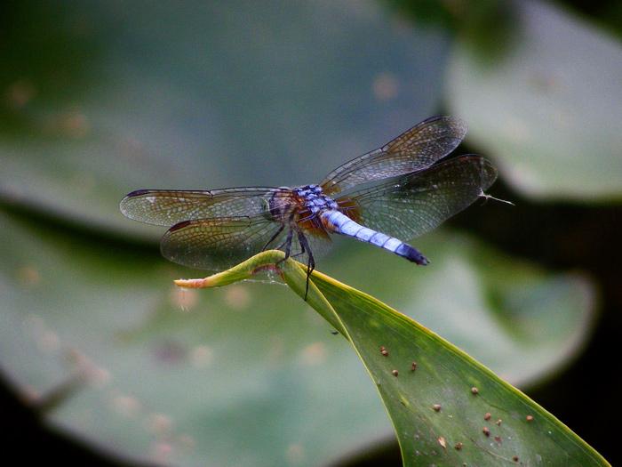 Dragonfly! Yayyy!