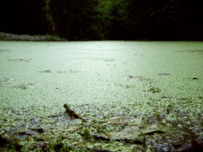 Algae River, as far as the eye can see