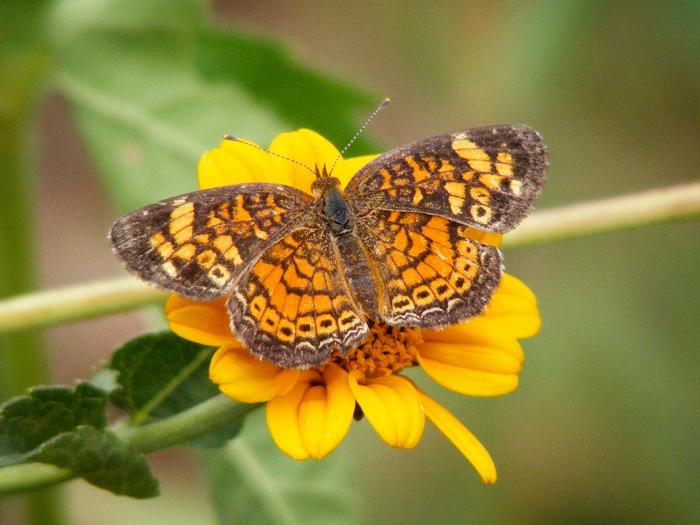 Hooray butterflies