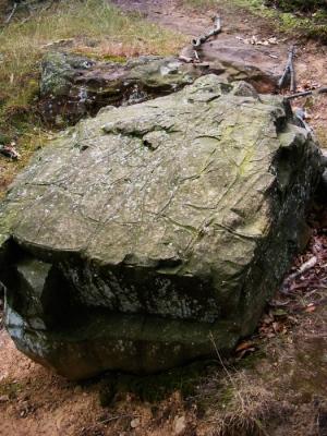 A turtle back boulder!