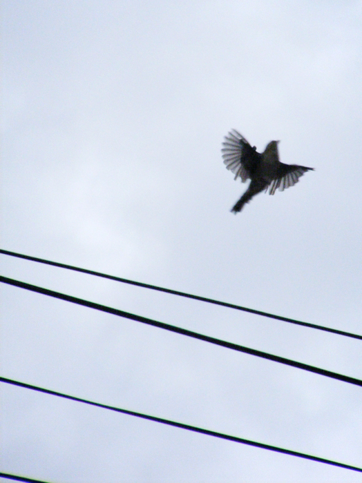 Sparrow in flight