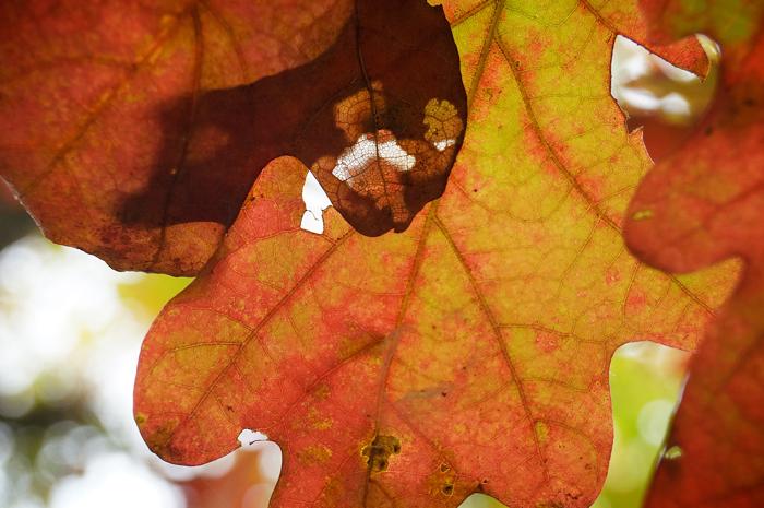 Another leaf macro, ho hum