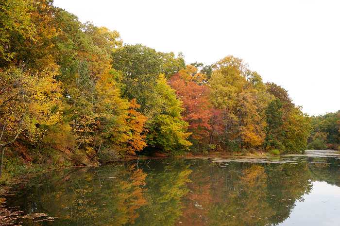 Seeley's Pond in the fall