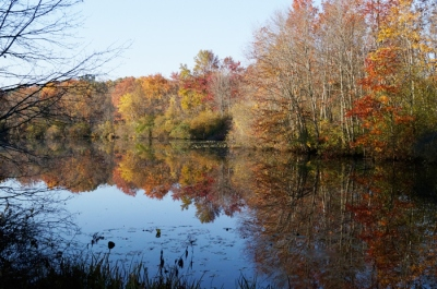 Pond by the Great Swamp, Chatham Twp