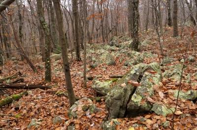 Leafy green lichens on rocks!