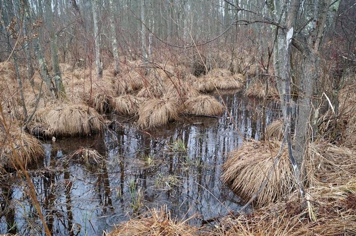 Grassy swampy lumps