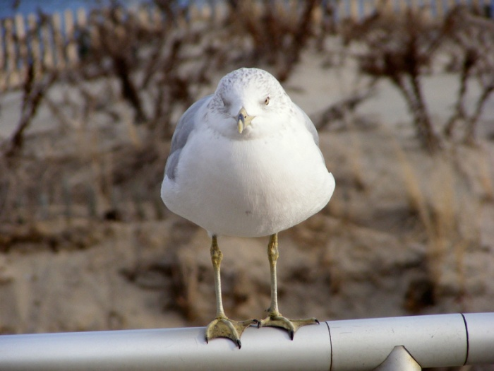 Mad seagull!