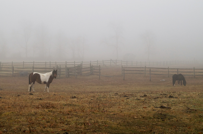Horses in fog. Well, maybe that guy/gal is a pony, I dunno.