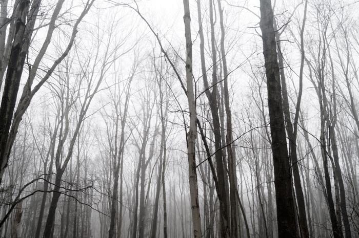 Treetops, yes.