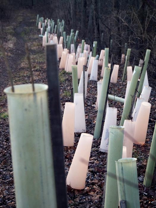 Tree tubes!
