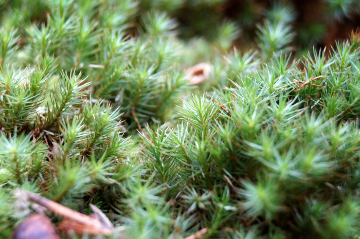 Moss is moss