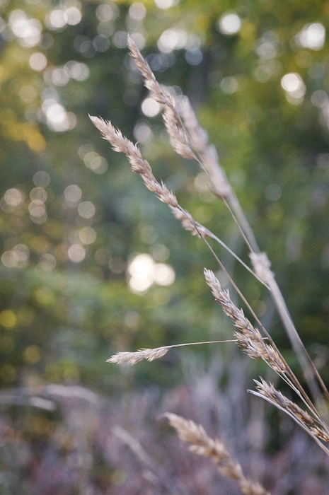 I have no idea why I'm so obsessed with bokeh lately.