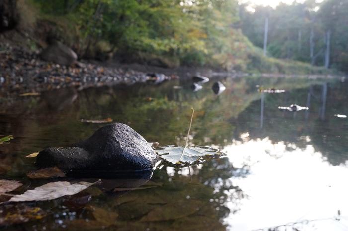 Ye Olde Passaic River